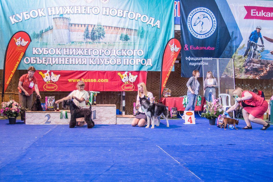 Best Veteran - BIS «Cup of the Nizhny Novgorod association of breed clubs 2016» (Russia), Sunday, 12 June 2016