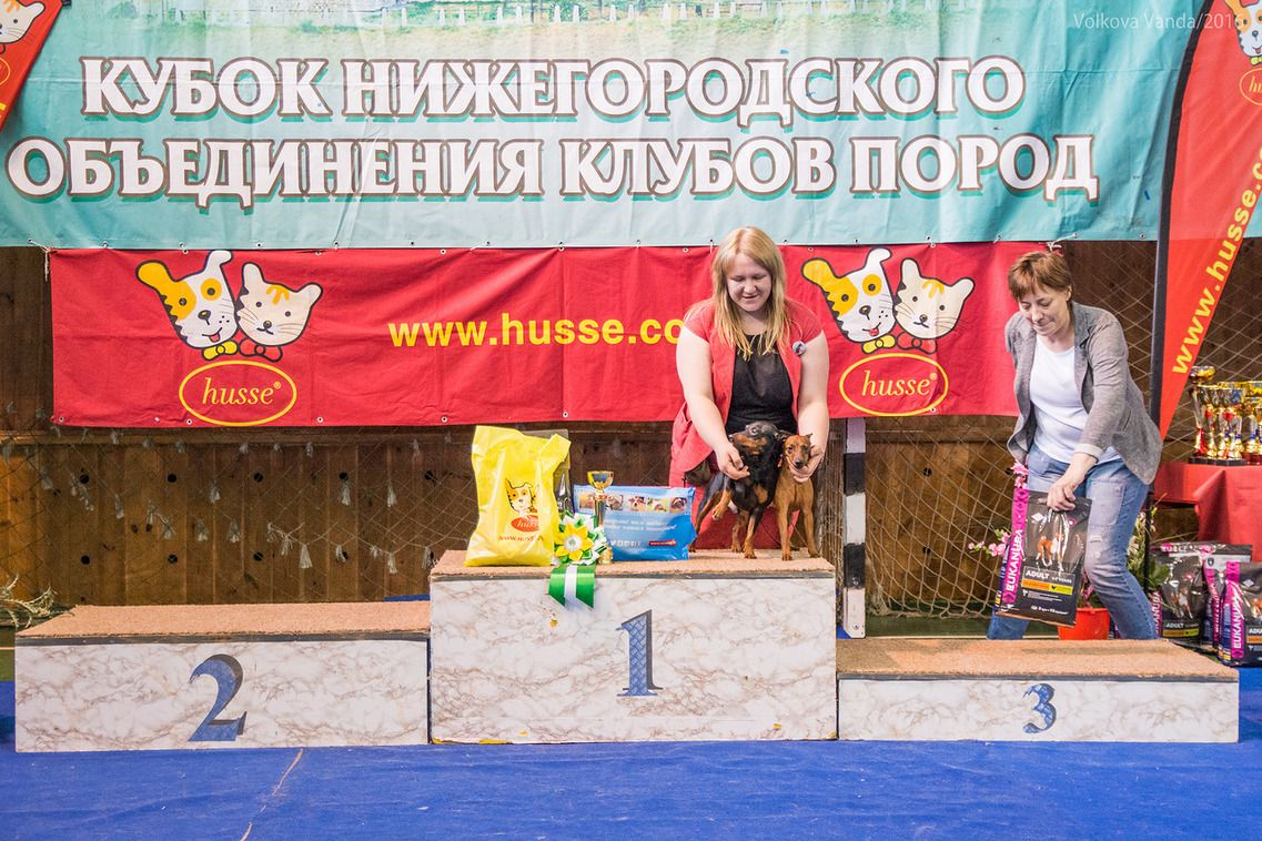 Best Brace - BIS «Cup of the Nizhny Novgorod association of breed clubs 2016» (Russia), Sunday, 12 June 2016