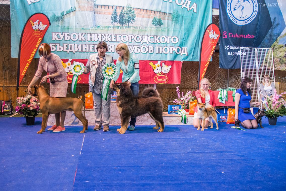 Best Puppy - BIS «Cup of the Nizhny Novgorod association of breed clubs 2016» (Russia), Sunday, 12 June 2016