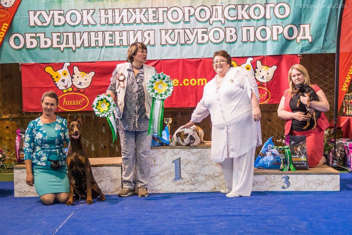FCI group II - BIS «Cup of the Nizhny Novgorod association of breed clubs 2016» (Russia), Sunday, 12 June 2016