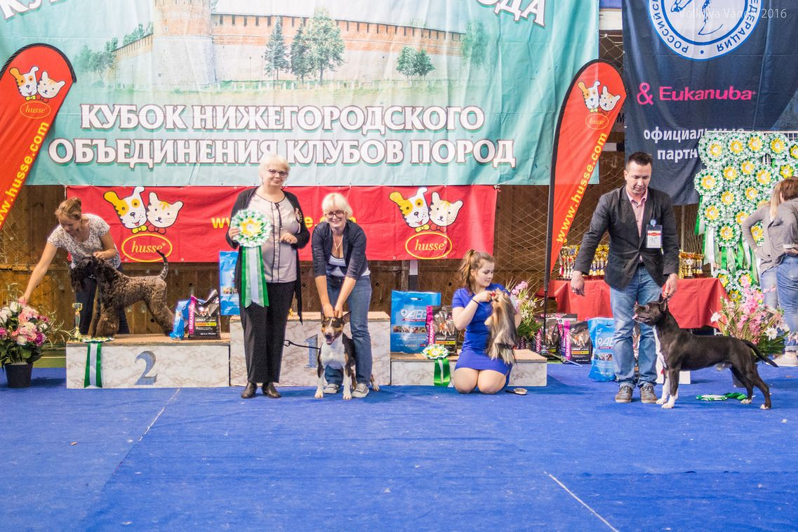 FCI group III - BIS «Cup of the Nizhny Novgorod association of breed clubs 2016» (Russia), Sunday, 12 June 2016