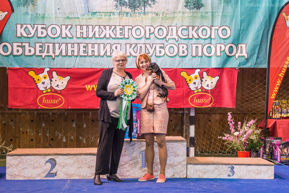 FCI group IV - BIS «Cup of the Nizhny Novgorod association of breed clubs 2016» (Russia), Sunday, 12 June 2016