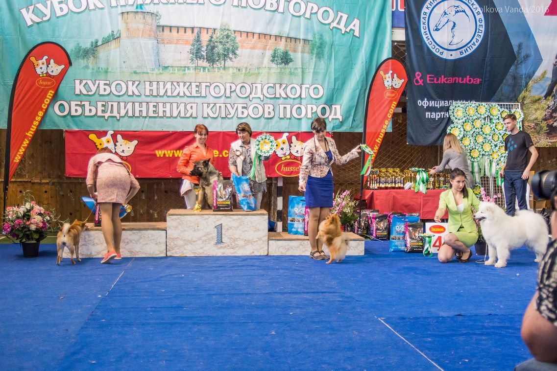 FCI group V - BIS «Cup of the Nizhny Novgorod association of breed clubs 2016» (Russia), Sunday, 12 June 2016