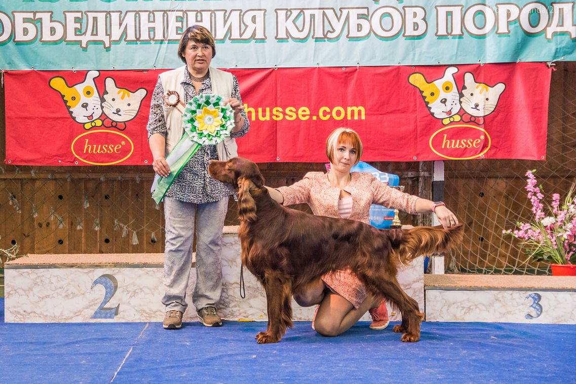 FCI group VII - BIS «Cup of the Nizhny Novgorod association of breed clubs 2016» (Russia), Sunday, 12 June 2016