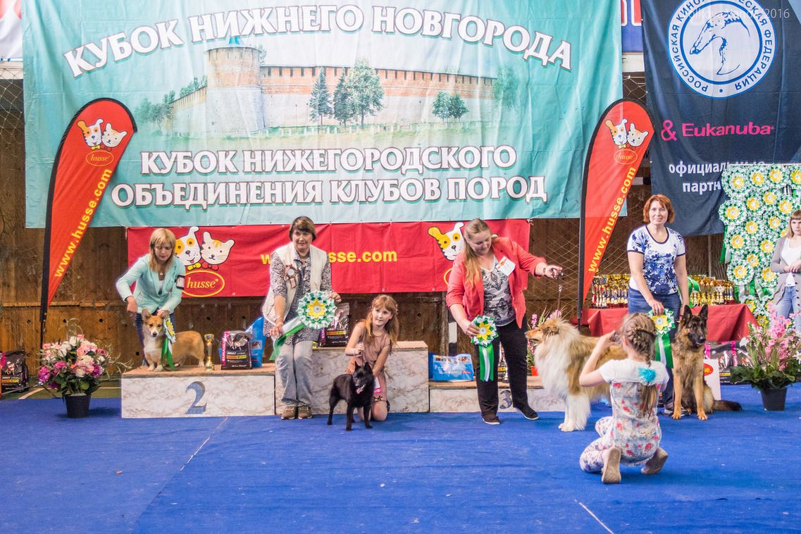 FCI group I - BIS «Cup of the Nizhny Novgorod association of breed clubs 2016» (Russia), Sunday, 12 June 2016