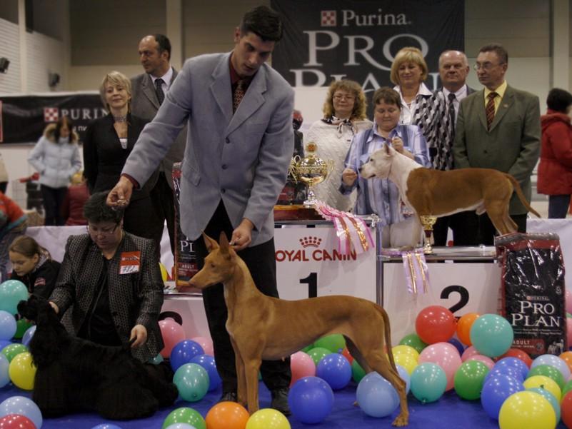 Лучшая собака выставки