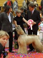 Лучшая собак выставки